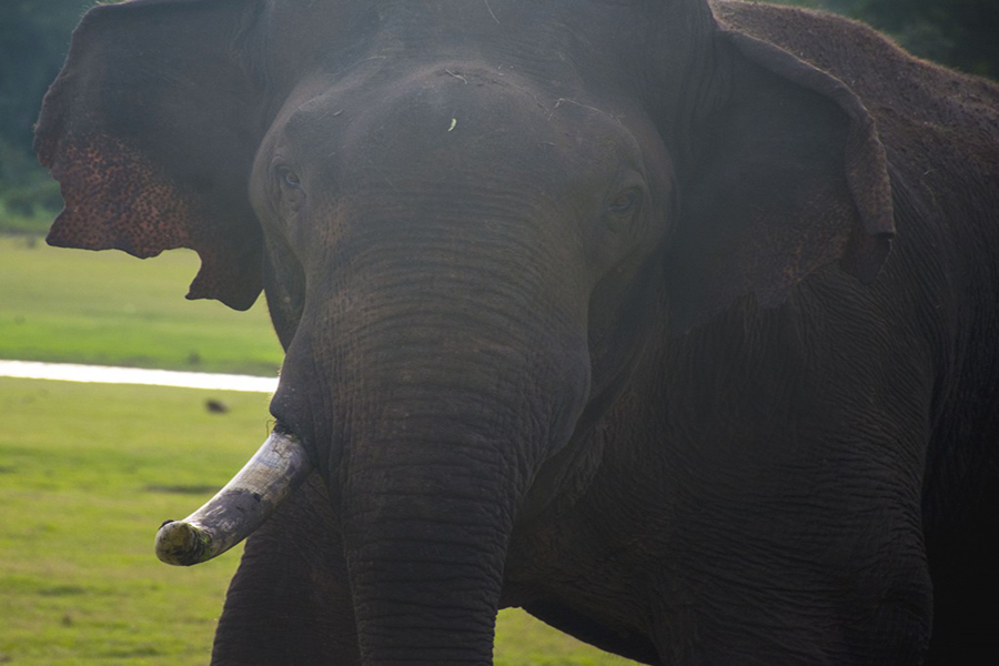 An alpha elephant gets close to our vehicle at Nagarahole National Park. (Photo: Diana Lopez)