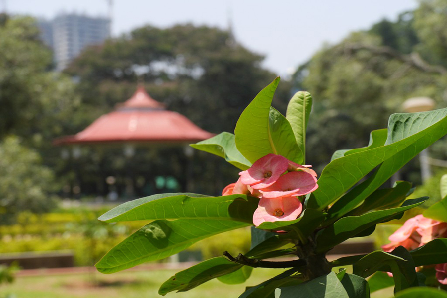 A nature scene with the city peeking through in the background on our walk through Cubbon Park. (Photo: Krysten Massa)