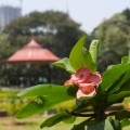 A nature scene with the city peeking through in the backround on our walk through Cubbon Park. (Photo: Krysten Massa)