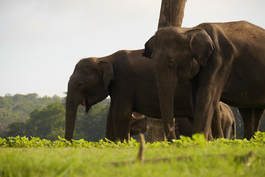 An elephant family, up close and personal on the banks of Kabini River (Photo: Krysten Massa)