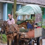 A horse drawn wagon in in Vinales along a road of casa particulares. Photo by Janelle Clausen.