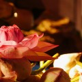 Flower in City Market PC Massa15