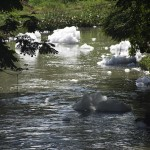 Bits of foam break off from the mass and continue along the waterway. (Photo: Kelly Zegers)