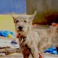 Stray dog at City Market. (Photo credit: Diana Lopez.)